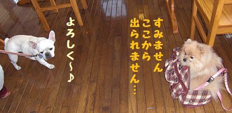 izu201012a.jpg