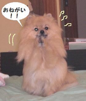 onegai.JPG