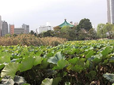 seiyouken3.JPG