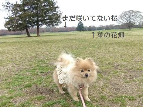 syouwa1.JPG