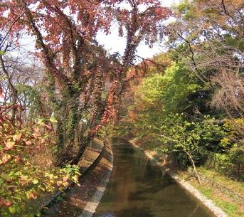 tamagawajousui2.JPG