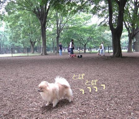 yoyogi7.JPG